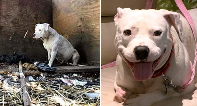 Dog Who Chewed Her Paw Off to Free Herself from a Chain Has Been Rescued