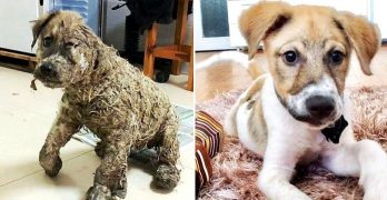 You Won't Believe What the Puppy Who Was Nearly Drown in Glue Looks Like Now!