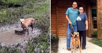 UPDATE: Dog Chained to a Concrete Block and Left to Drown Has Been Adopted!