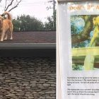 Family Puts Up a Sign to Let Neighbors Know Why Their Dog Is On the Roof