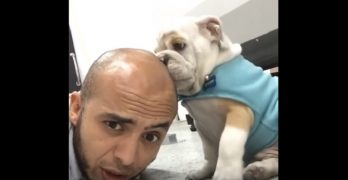 Bulldog Puppy Is OBSESSED With Licking His Human's Head
