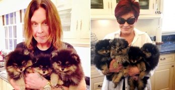 Ozzy & Sharon Osbourne to Open a Doggie Daycare on Their UK Estate