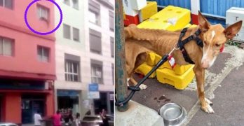 Heroic Passersby Save Literal Skin-and-Bone Dog Who Jumped Out of a Window