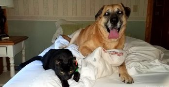 Dog Finds Family Cat TWO MONTHS After the House Fire That Nearly Killed Them Both