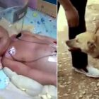 Heroic Dog Saves a Baby That Had Been BURIED ALIVE!