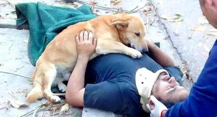 Devoted Rescue Dog Refuses to Leave His Unconscious Dad's Side Until Help Arrives