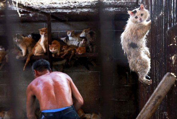 BREAKING NEWS: China Has BANNED Dog Meat from the Yulin