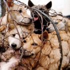 BREAKING NEWS:  China Has BANNED Dog Meat from the Yulin Festival!
