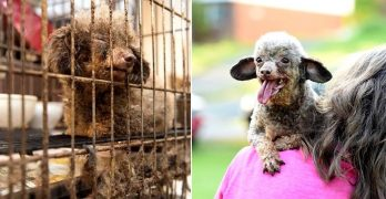 Puppy Mill Mama Who Spent Her Whole Life in a Basement Cage Can't Stop Smiling at the World
