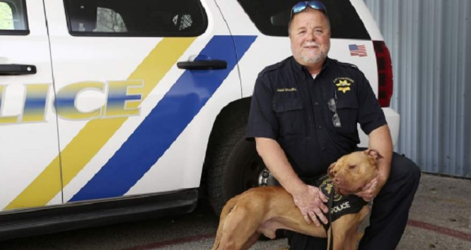 Shelter Dog Labeled 'Problem Child' Becomes the First Pit Bull K9 Officer Ever in the State of Ohio