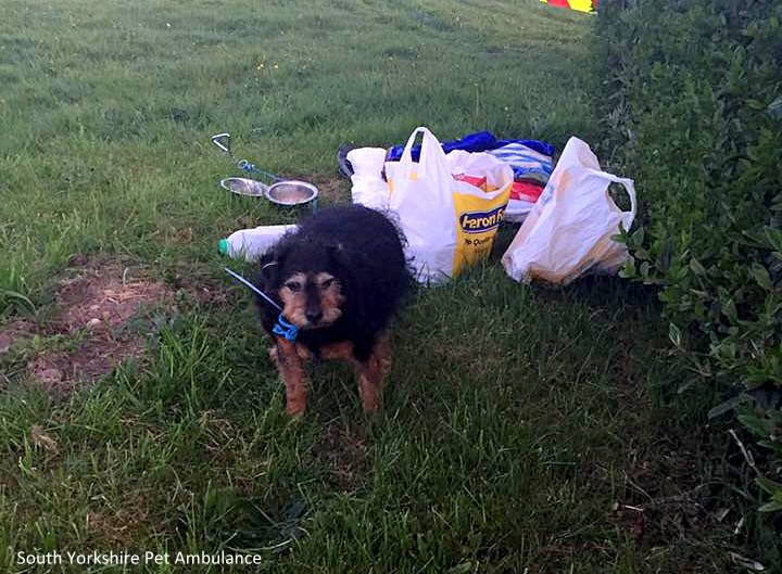 "Senior Abandoned in Field With Note: ""Sorry … But I Don't Need A Dog."""