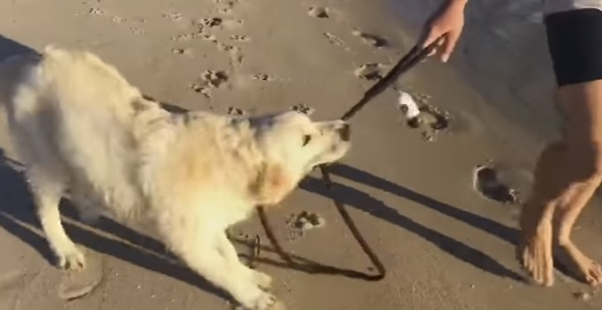 """Angus Is NOT a Fan of the """"No Unleashed Dogs on the Beach"""" Rule"""