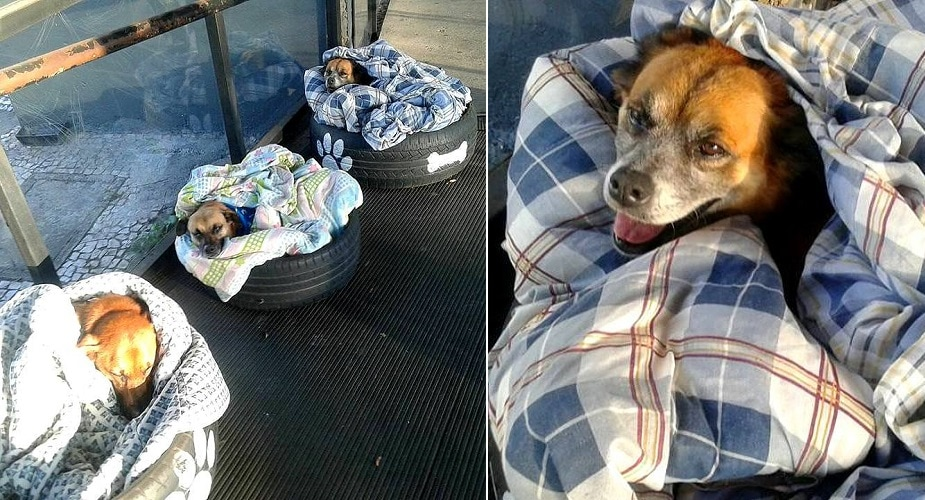 Brazilian Bus Station Set Up Beds to Keep Local Street Dogs Warm This Winter