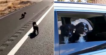 Man on a Road Trip Finds Two Puppies on an Empty Highway, So He Brings Them Along