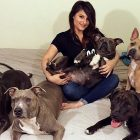 This Woman Is Addicted to Bringing Home Pit Bulls!