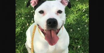 Amora Is a Spunky, Fun-Loving Pooch Ready to Love you and your Friends and Family