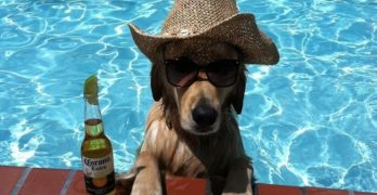 These Dogs Are Ready for Summer Time, Are You?