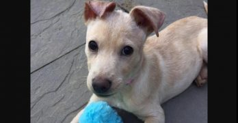 Alina Is a Parvo Survivor Who Is Just Waiting for Her Snuggle Partner