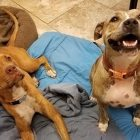 Star and Cooper Were Adopted Together and for Some Reason Found Abandoned Just One Month Later