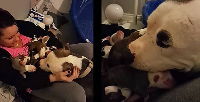 Grayce Brings All Eleven of Her Puppies to Her Foster Mom Before Getting Some TLC for Herself