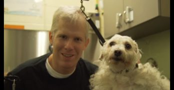 Groomer Volunteers His Time and Services at an NYC Shelter Doing Badly Needed Makeovers