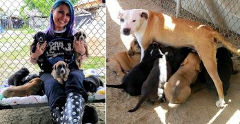 Emaciated Stray Mama Dog Leads Rescuer TWO MILES to Find Her Puppies