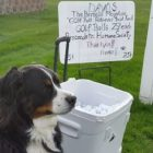 Dog Volunteers Ball Retrieval Services at Golf Course to Raise Money for Shelter Animals