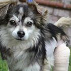 Hawk Is Healing Nicely from Surgery, and Soon He Will Be Looking for a New Forever Family