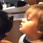 Toddler Gives a Giant Dog a Kiss, Only to Be Knocked Over by a Return-Kiss from the Dog