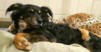 The Cincinnati Zoo's Beloved Nursery Dog, Blakely, Has Retired