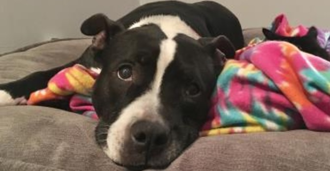 Cookie's Former Owner Skipped Town and Dumped Her on the Streets When They Left