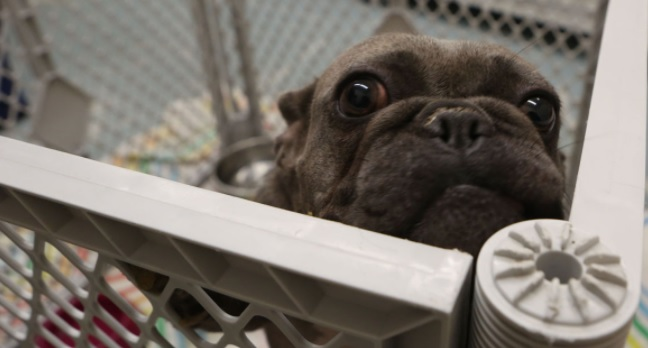 Indiana Sheriff's Department Raids Unlicensed Vet Operation, Rescues 68 Dogs