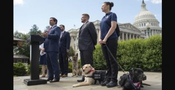 Senators Reintroduce PAWS Act to Make It Easier for Vets With PTSD to Get Service Dogs