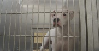 Franklin County Dog Shelter in Ohio Has Multiple Confirmed Parvo Cases and Needs Our Help