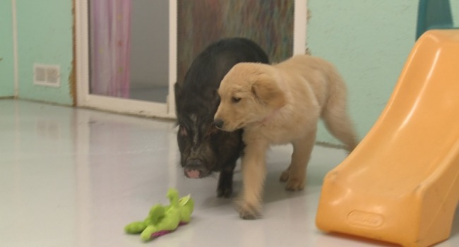 Free Rent??! Vancouver Doggie Daycare Makes Big Offer on Craigslist Classifieds