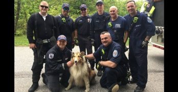 Maryland Firefighters Rescue Dog From Hole