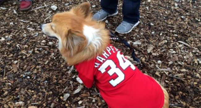 Washington, D.C. Brewery Creates On-Site Dog Park