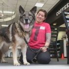 A New Forever Family: Military Dog Reunites With Air Force Handler