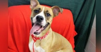 Cleaning House! Kentucky Shelter Adopts Out Every Dog