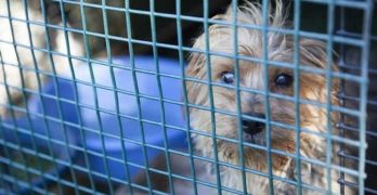 Georgia Town Is The Latest To Ban Dog/Cat Sales In Pet Shops