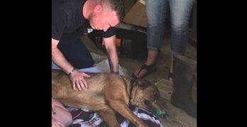 (Dog) Breath of Life : Firefighters Save Pooch From House Fire