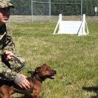 Tiny Dog, Big Job: Pusko's On Patrol at the World's Largest Naval Base