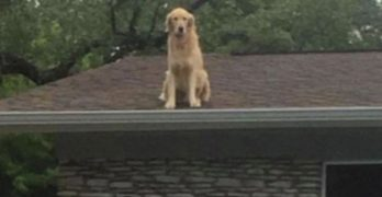 Floof on the Roof: Huck Digs Heights