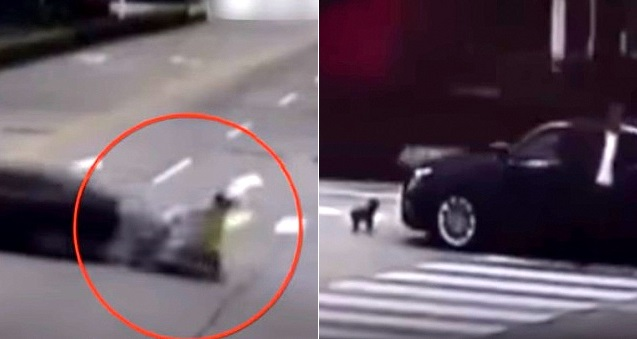 Faithful Dog Chases the Car That Struck His Mom's Motorcycle