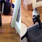 Goofy Dog Has Started Walking Out of the Kitchen Backwards, But No One Knows Why