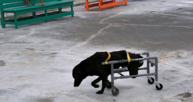 Man Makes Super Cool Doggy Wheelchairs for the Dogs in a Taiwanese Shelter