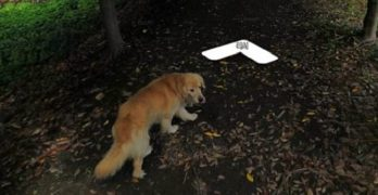 """Dog """"Marks His Territory"""" by Photo-Bombing Mapper's Photos on a Tiny South Korean Island"""