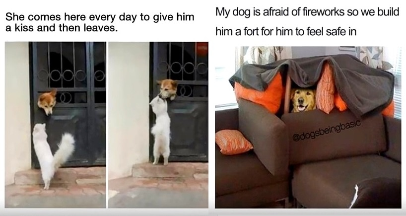 Dog Memes That Will Make Your Heart Absolutely Burst With Joy