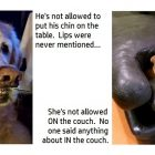 Times That Dogs Bent the Rules & Got Away With It Because They're Just So Damn Cute!