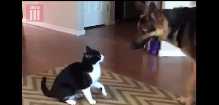 "Shocking Plot Twist in ""Fight"" Between a Dog and a Cat"